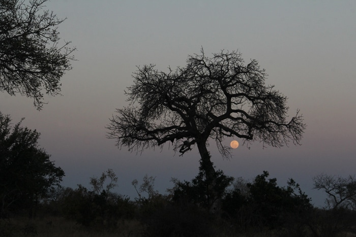 andBeyond Ngala Full moon rise over the Bush